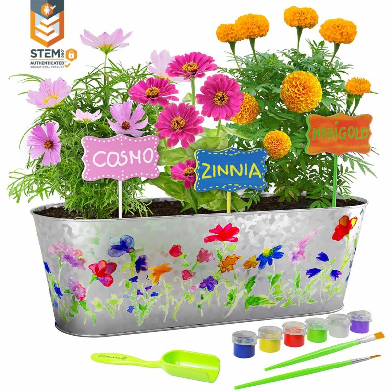 Paint & Plant Flower Growing Kit STEM Activity for Kids - Brave Little Mom - Blog for Moms - Blog for Single Moms